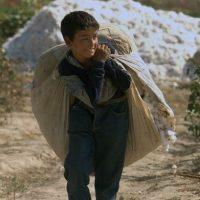 Child labor-cotton-uzbekistan